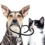 Prix mutuelle chat pour comparateur mutuelle chien chat