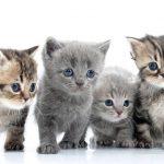 Mutuelle pour les chats pour mutuelle chat prix