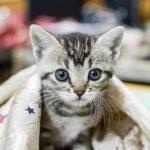 Avis mutuelle chat : mutuelle chat avis