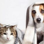 Mutuelle chat avis / mutuelle chat prix