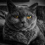 Meilleure mutuelle chat et comparateur mutuelle chien chat