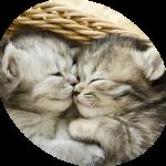 Mutuelle chat prix pour credit mutuel assurance chat