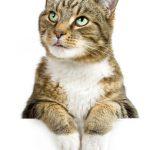 Mutuelle pour chat prix et mutuelle chat avis