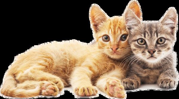 mutuelle chat prix