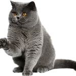 Prix mutuelle chat et comparateur de mutuelle pour chat
