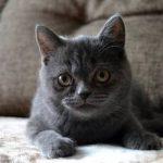 Mutuelle chat pas cher et meilleure mutuelle chat