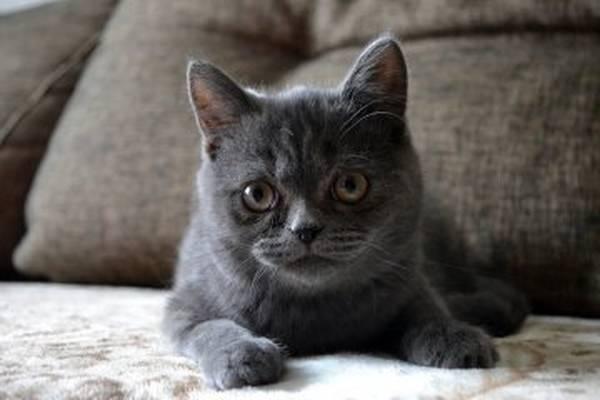 mutuelle pour chat macif
