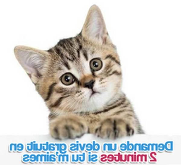 mutuelle pour chat prix