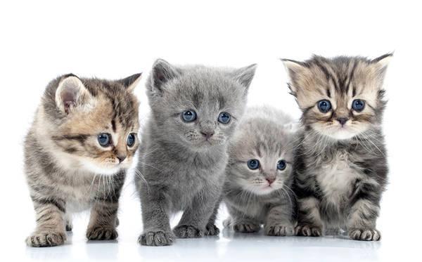 avis mutuelle chat