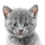 Comparatif mutuelle chat pour comparateur mutuelle chien chat