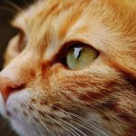 Meilleure mutuelle chat et mutuelle vieux chat