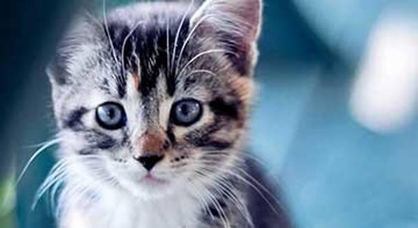 mutuelle chat macif