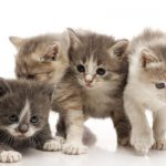 Mutuelle chat tarif et mutuelle chat macif
