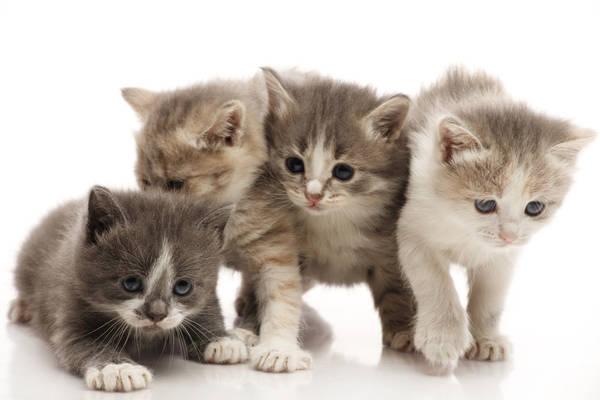 comparateur de mutuelle pour chat