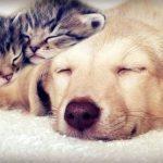 Mutuelle chat pas cher pour mutuelle chat comparateur