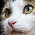 Assurance chat crédit mutuel ou mutuelle vieux chat