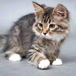 Avis mutuelle chat : comparateur de mutuelle pour chat