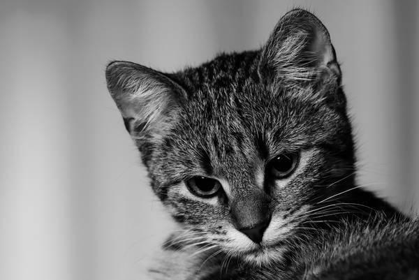 mutuelle vieux chat