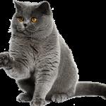 Prix mutuelle chat : comparateur de mutuelle pour chat