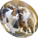 Mutuelle chat prix pour mutuelle chat tarif