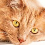 Mutuelle vieux chat / mutuelle chat macif
