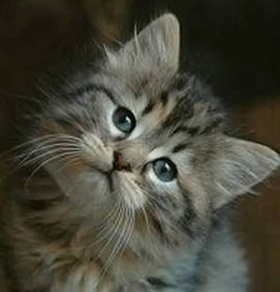 mutuelle pour les chats