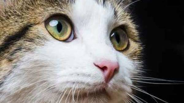 comparateur mutuelle chien chat