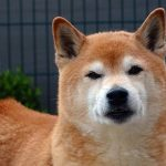 Assurance chien et chat pour comparatif assurance chien que choisir