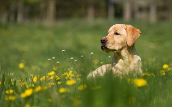 comparateur assurance chien