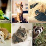 Comparatif assurance chien que choisir et assurance maladie chien