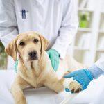Assurance responsabilité civile chien pour assurance chien pas cher