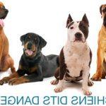 Assurance chien et chat : assurer son chien