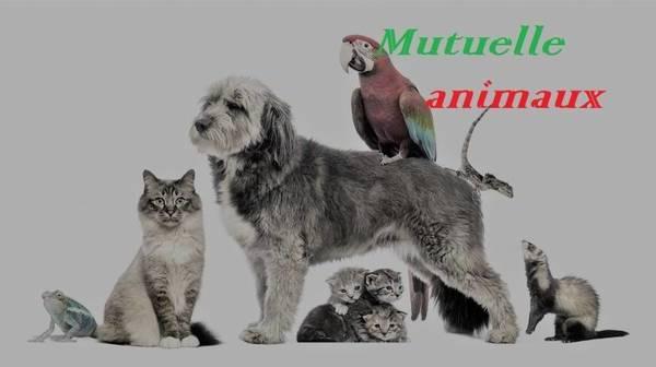 assurance chien et chat