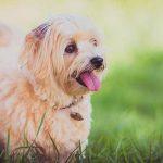Assurance santé pour chien / assurance vétérinaire chien