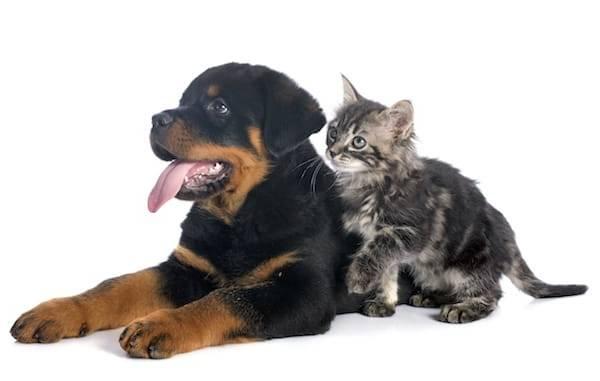 prix assurance chien
