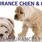 Avis assurance chien et comparateur assurance chien