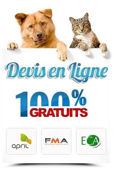 assurance maladie pour chien
