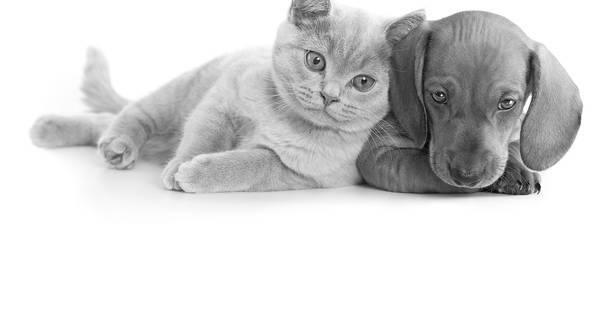 meilleur assurance pour chien