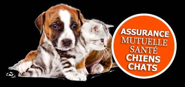 assurance civile chien