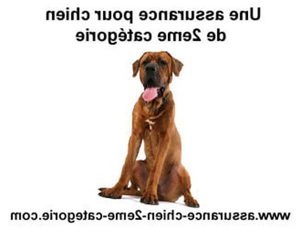 assurance chien avis