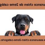 Assurance maladie pour chien ou assurance chien categorie 2