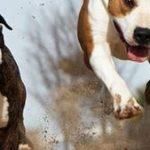 Eca assurance chien et assurance chien de chasse
