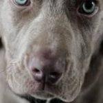 Eca assurance chien pour assurance chien categorie 2
