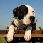Meilleur assurance pour chien : avis assurance chien