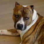 Assurance pour chien ou assurance chien de chasse