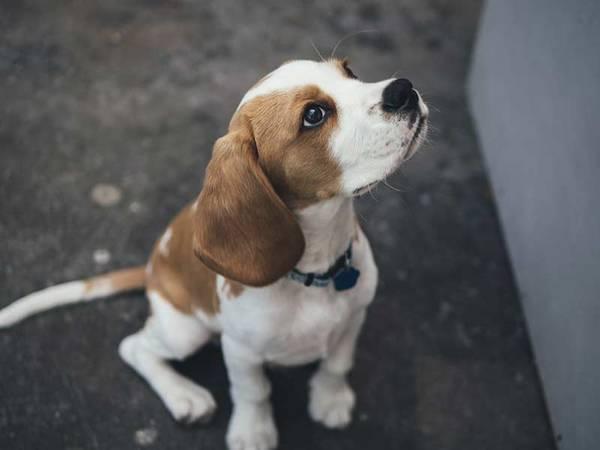 assurance vétérinaire chien