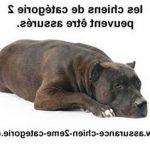 Assurance vétérinaire chien et avis assurance chien