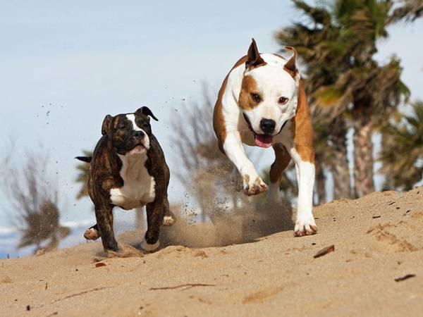 assurance santé pour chien