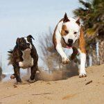 Comparatif assurance chien que choisir : assurance maladie chien