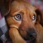 Carrefour assurance chien : comparatif assurance chien